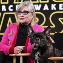 Featured Collections:  Carrie Fisher