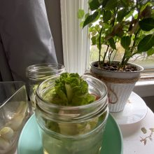 STEAM at Home: Plants from Scraps