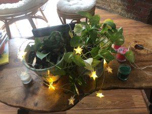 Decorate Houseplants