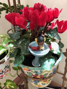 Diversify Fairy Garden 7