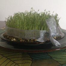 Celebrate Nowruz, the Persian New Year